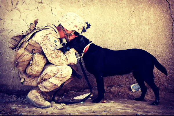 soldier in tactical boots with black dog